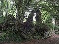 Cas Troggy - geograph.org.uk - 570336.jpg
