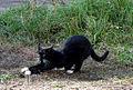 Cat E2.jpg