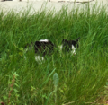 Cat in grass.png
