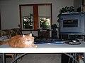 Catcomputer1.jpg