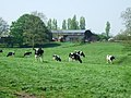 Cattle grazing - geograph.org.uk - 793429.jpg