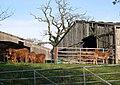 Cattle in a Farmyard at Horsham - geograph.org.uk - 84155.jpg