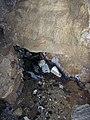 Cave stream 4 (8320870256).jpg