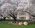 Cherry Blossoms on UW Quad - Flickr - brewbooks (4).jpg