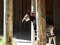 Chester Zoo (21902106059).jpg