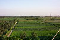 Hot-air balloon ride at Langfang Economic Development Zone near the Beijing Tianjin expressway in China overlooking farming crops. Photo taken 2003/08/10.