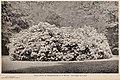 Choice hardy trees and plants (1894) (20421578200).jpg