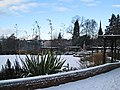 Christmas in the Rodney Gardens, Perth - geograph.org.uk - 1633162.jpg