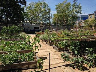 Urban agriculture in West Oakland