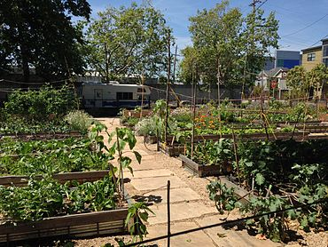 Urban Agriculture In West Oakland Wikipedia