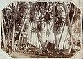 Collectie Nationaal Museum van Wereldculturen TM-60062311 Twee gebouwen tussen palmbomen, St. Ann Jamaica fotograaf niet bekend.jpg