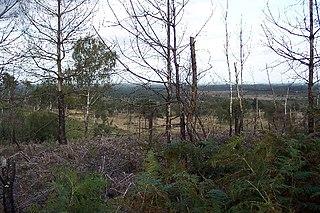 Colony Bog and Bagshot Heath