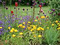 Colourful flowerbed in the Italian garden of mount Stewart house.jpg