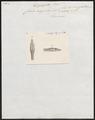 Coluber argenteus - kop - 1837 - Print - Iconographia Zoologica - Special Collections University of Amsterdam - UBA01 IZ12000077.tif
