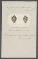 Columbella strombiformis - - Print - Iconographia Zoologica - Special Collections University of Amsterdam - UBAINV0274 087 09 0002.tif
