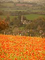Compton Abbas, poppies in sun, church in shade - geograph.org.uk - 1540832.jpg
