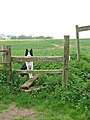 Concessionary footpath leading west - geograph.org.uk - 1276057.jpg