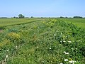 Conservation ditch, Bourne South Fen, Lincs - geograph.org.uk - 453367.jpg