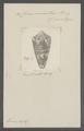 Conus aurantius - - Print - Iconographia Zoologica - Special Collections University of Amsterdam - UBAINV0274 086 06 0002.tif