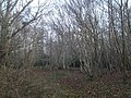 Coppiced woodland - geograph.org.uk - 1095649.jpg