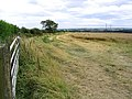 Cornfield at Longwitton - geograph.org.uk - 547484.jpg