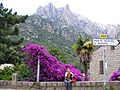 Corsica - Porto - Andrea & flower trees - panoramio.jpg