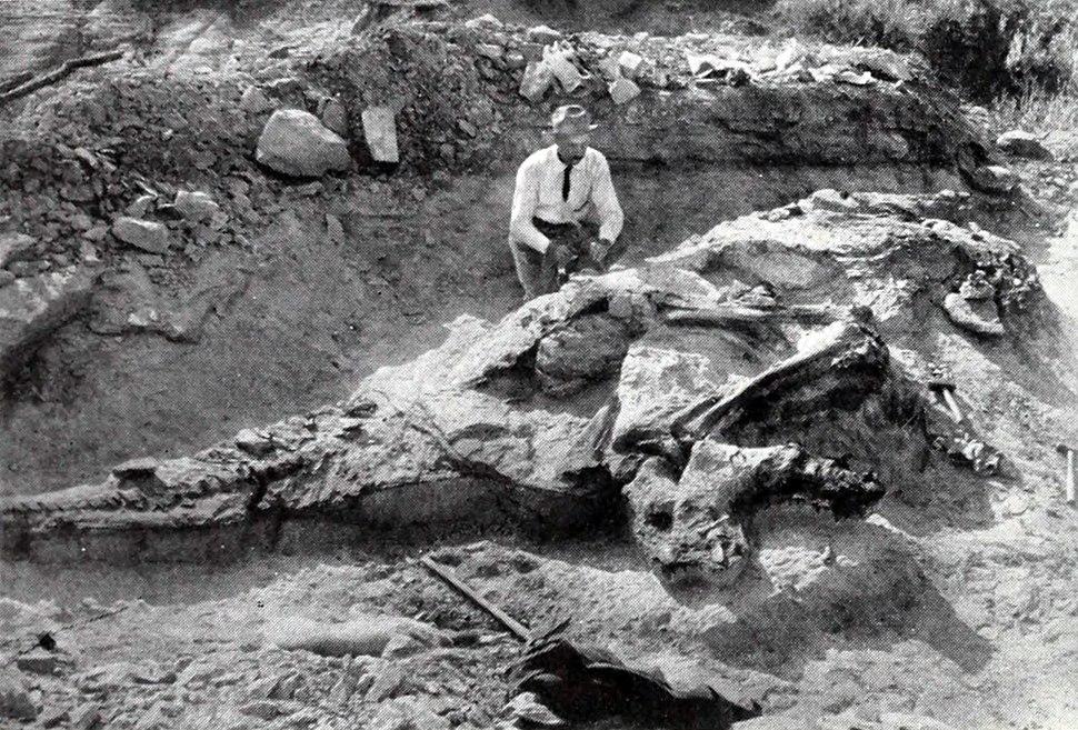 Corythosaurus excavation