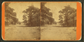 Cotton Ave, Macon, Ga, by A. J. Haygood.png
