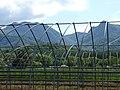Countryside around Furano - Hokkaido - Japan - 09 (48012306502).jpg