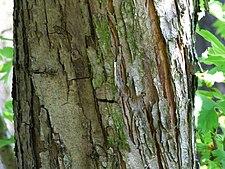 c 2 5 только что срезанного дерева: