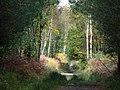 Creech Woods - geograph.org.uk - 1025173.jpg