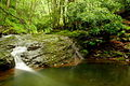 Creek-water-pool-stream - West Virginia - ForestWander.jpg