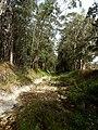 Creek bed, looking south - panoramio.jpg