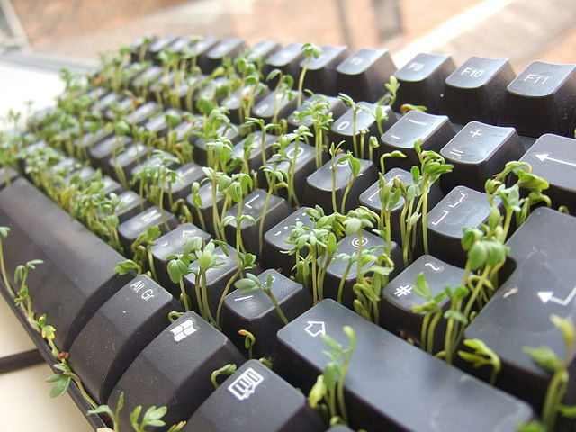 INsoliteRIgoloCOquin - Page 24 640px-Cress_keyboard-3_sprouting_other_side