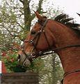 Cross country horse.JPG
