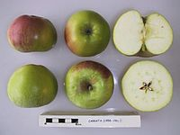 Cross section of Carrata, National Fruit Collection (acc. 1958-156).jpg