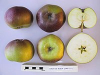 Cross section of Coeur de Boeuf, National Fruit Collection (acc. 1947-111).jpg