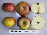 Cross section of Pomme de Fer, National Fruit Collection (acc. 1950-172).jpg