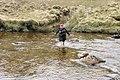 Crossing the Abhainn a' Choilich near Loch Mullardoch - geograph.org.uk - 812235.jpg