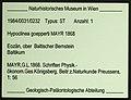 Ctenobethylus goepperti NHMW1984-31-232 specimen tag.jpg