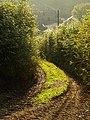 Dartmoor Way at Combe Farm - geograph.org.uk - 1013984.jpg