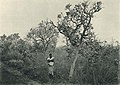 Das südliche Togo (Busse) - Tafel 10 - Baumsteppe in der Nähe des Chra-Flusses.jpg