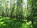 Deciduous woodland, Portmore - geograph.org.uk - 1501049.jpg