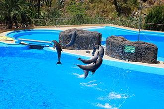 Palmitos Park - Image: Delfine Palmitos Park 2010