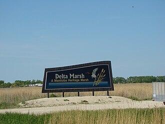 Delta Marsh - Image: Delta Marsh Manitoba Canada