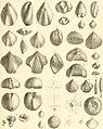 Denkschriften der Kaiserlichen Akademie der Wissenschaften, Mathematisch-Naturwissenschaftliche Classe (1885) (20827980456).jpg