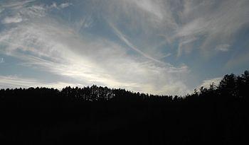 Deodar and Sky.jpg