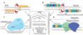 Designer nucleases for inactivating viral oncogenes.webp
