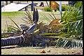 Destruction of Woody Point-05-Large (2924129190).jpg