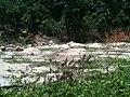 Destruição - panoramio (1).jpg
